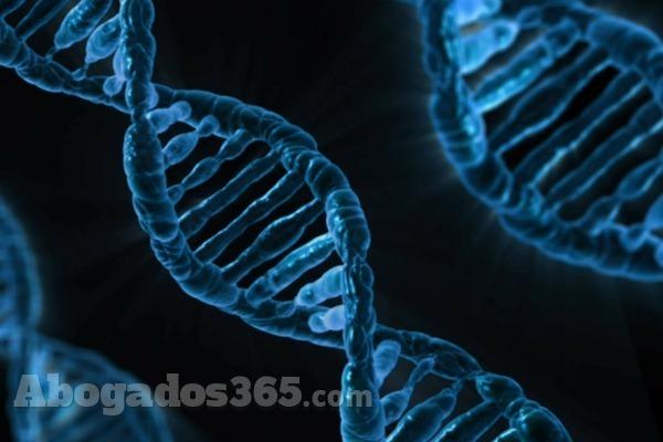 ADN, ¿qué consecuencias tiene descubrir una relación paternofilial?