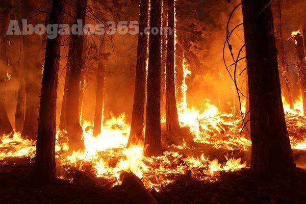 Sentencia Audiencia Provincial de Málaga sobre responsabilidad en caso de incendio